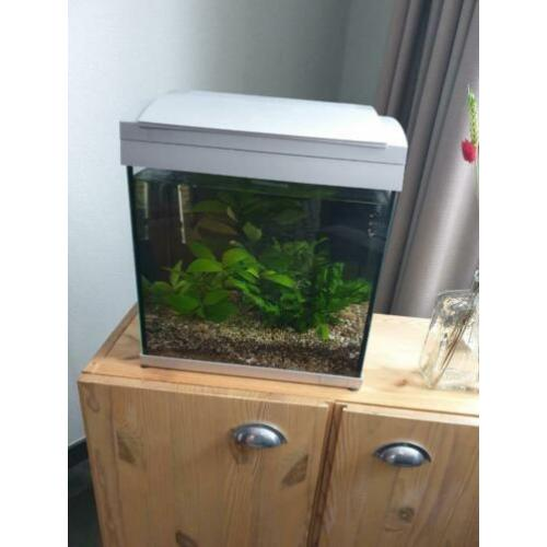 SuperFish 30 aquarium
